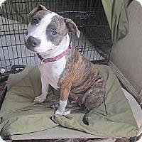 Adopt A Pet :: Liberty - Copperas Cove, TX