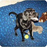 Adopt A Pet :: Bella HAPPY AND FUN! - Antioch, IL