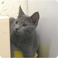 Adopt A Pet :: Sara - Metairie, LA