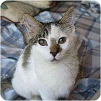 Adopt A Pet :: Little Girl - Davis, CA