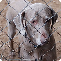 Adopt A Pet :: Czar (w/Maggie) - Grand Haven, MI