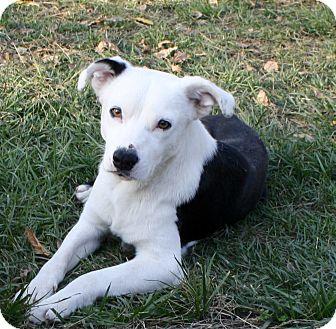 Border Collie Mix Dog for adoption in Sacramento, California - Runner!