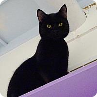 Adopt A Pet :: O'Neil - Belleville, MI