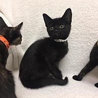 Adopt A Pet :: Poke - Mission Viejo, CA