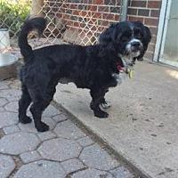 Adopt A Pet :: Ellie Mae - Grantville, PA
