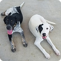 Adopt A Pet :: Jafar - San Antonio, TX