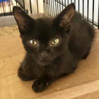 Adopt A Pet :: Pancho - Clarksdale, MS