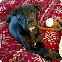 Adopt A Pet :: Duncan - Homewood, AL