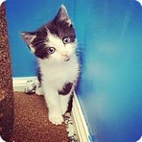 Adopt A Pet :: Hunt - Lexington, KY