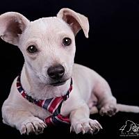 Adopt A Pet :: River - Lodi, CA