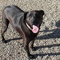 Adopt A Pet :: Allie - Clear Lake, IA