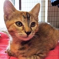 Adopt A Pet :: Katrina the Kind - Grants Pass, OR