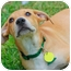 Photo 2 - Labrador Retriever Mix Puppy for adoption in Austin, Texas - Milo