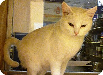 Domestic Shorthair Cat for adoption in Worcester, Massachusetts - Casper