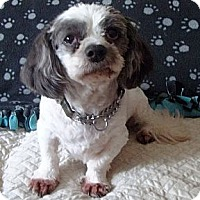 Adopt A Pet :: Dirks - Mississauga, ON