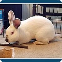 Adopt A Pet :: Carlisle - Williston, FL