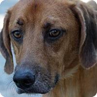 Adopt A Pet :: Zack - Crawfordville, FL