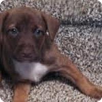 Adopt A Pet :: Garth - Washington, NC