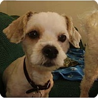 Adopt A Pet :: Nelly - Rigaud, QC