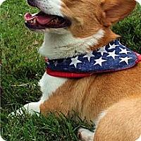 Adopt A Pet :: Rupert - Murfreesboro, TN