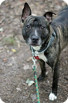 Terrier (Unknown Type, Medium) Mix Dog for adoption in Tinton Falls, New Jersey - Hennessey