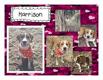 Hound (Unknown Type) Mix Dog for adoption in Graford, Texas - Harrison