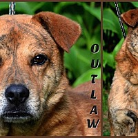 Adopt A Pet :: Outlaw - Jackson, MS