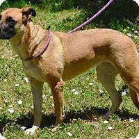 Adopt A Pet :: Duchess - Payson, AZ