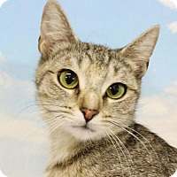 Adopt A Pet :: Marble - Harrisonburg, VA
