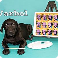 Adopt A Pet :: Warhol - Joliet, IL