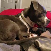 Adopt A Pet :: Kendrick - Jacksonville, NC
