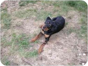 Rottweiler Puppy for adoption in McDonough, Georgia - Maggie