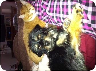 Terrier (Unknown Type, Small) Mix Dog for adoption in El Segundo, California - Patrick