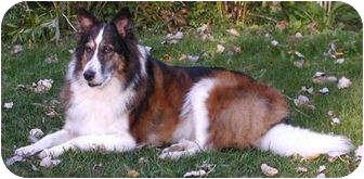 Collie Mix Dog for adoption in Minneapolis, Minnesota - Pippa