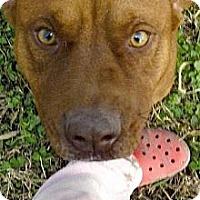 Adopt A Pet :: Dan - Moulton, AL