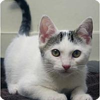 Adopt A Pet :: Wolverine - Secaucus, NJ