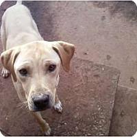 Adopt A Pet :: Heather in OK - Oklahoma City, OK