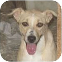 Adopt A Pet :: Prissy - Colorado Springs, CO