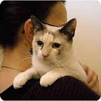 Adopt A Pet :: Raindrop - Arlington, VA