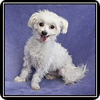 Adopt A Pet :: KC - Ft. Bragg, CA