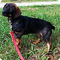 Adopt A Pet :: Nylan - Maysel, WV