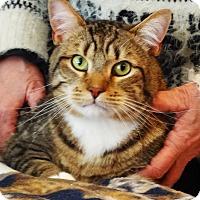 Adopt A Pet :: Pasho - N. Billerica, MA
