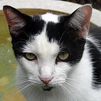 Adopt A Pet :: Chevy - Palm City, FL