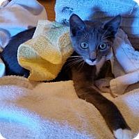 Adopt A Pet :: Bond, James Bond - Ocala, FL