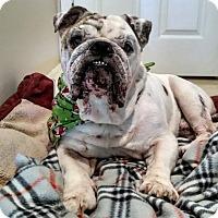 Adopt A Pet :: Bowzer - Odessa, FL