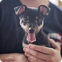 Adopt A Pet :: Sheldon - Kingwood, TX