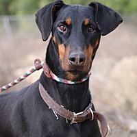 Adopt A Pet :: Satin - Fillmore, CA