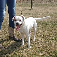 Adopt A Pet :: Zorro - Trenton, MO