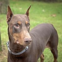 Adopt A Pet :: Auggie - Navarre, FL