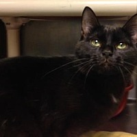 Adopt A Pet :: Ellie Mae - Anderson, IN